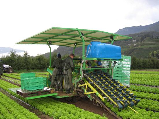 Оборудование для выращивания моркови 90
